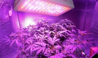 best-1200w-led-grow-light-2